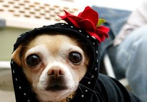 Sony выпустит видеокамеру для собак