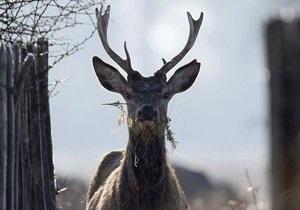 Двух американцев оштрафовали за спасение оленя