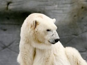 Умер старейший в мире полярный медведь