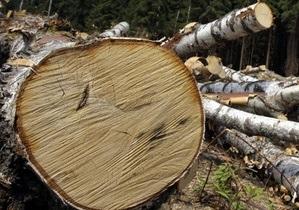 Бригинец: В столичном заповеднике незаконно срезали полсотни многолетних деревьев