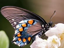 Бабочки хранят воспоминания о своей прошлой жизни