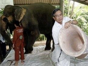 Слону, подорвавшемуся на мине, сделали протез ноги