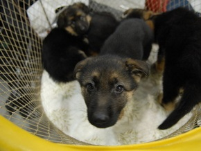 Киевские пожарные спасли щенка