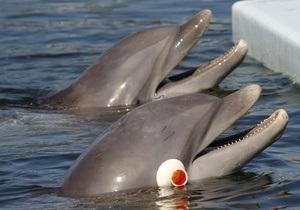 Сегодня киевский суд рассмотрит дело о сносе дельфинария Немо