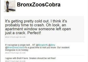 У змеи, исчезнувшей из нью-йоркского зоопарка, появился аккаунт на Twitter