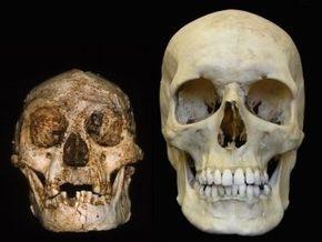 Исследователи: Древний  хоббит   - не человек