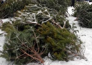 В Киеве сотрудники ГАИ изъяли почти три тысячи елок и сосен