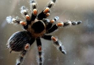 Британские ученые выяснили, как паукам удается ползать по стенам