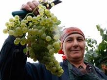 Компания Национальные Алкогольные Традиции провела пресс-тур в Коблево