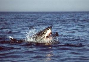 В Египте поймали акулу, напавшую на туристов
