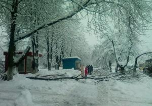 непогода в Украине - Ивано-Франковск - В Ивано-Франковске упавшее дерево повредило пять автомобилей