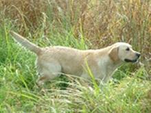 В Техасе собака застрелила своего хозяина