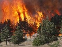 Грузия потребует возмещения ущерба от РФ за сгоревший в районе Боржоми лес