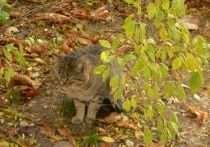 В Севастополе кот спас свою хозяйку от гибели