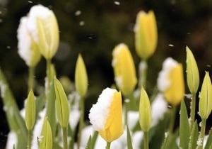 Прогноз погоды на пятницу, 25 марта