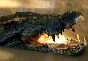 Ископаемый гигантский удав глотал крокодилов