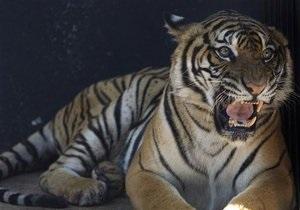 В США оставшийся без электричества ресторан подарил тиграм тонну мяса