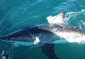 Египет намерен ввести новые меры безопасности для защиты туристов от акул