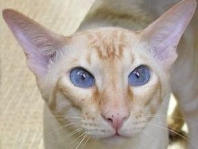 В США неизвестные выбросили на дорогу 70 мертвых котов в мешках