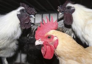У птичьего гриппа появилась устойчивость к лекарствам