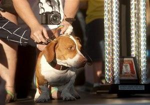 Новости США - новости о животных: В США выбрали самую уродливую собаку в мире