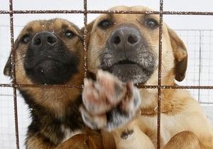 Директор приюта для животных подозревается в присвоении более 60 тыс грн
