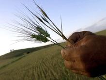 Кабмин отменил квоты на экспорт зерна