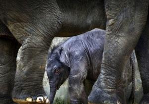 Газета по-киевски: Омельченко предложил депутатам купить слона для столичного зоопарка