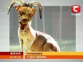 СТБ: Жителей Прикарпатья терроризирует чупакабра