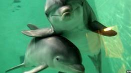 Дельфины достойны прав человека, считают ученые