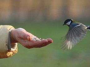Ученые: Сельские птицы не понимают пения городских