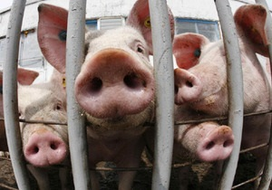 Эксперты прогнозируют резкий рост цен на свинину