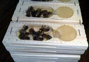 Гражданка России пыталась вывезти из Украины 157 контейнеров с ценными пчелами