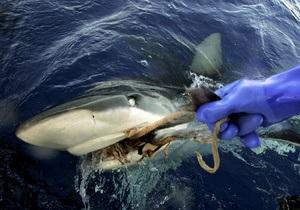 Российские рыбаки выловили двухметровую акулу