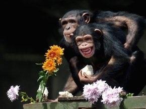 Ученые: Обезьяны передали человеку смех по наследству