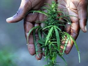 В Киевской области изъяли партию марихуаны на сумму $25 тыс