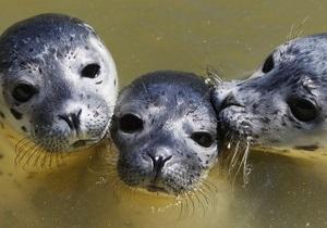 новости Киева - Киевский зоопарк - тюлени - животные - Киевский зоопарк бесплатно получит польских тюленей