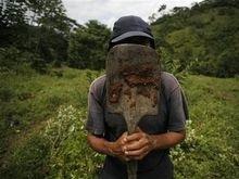 ООН шокирована темпами роста производства коки в Колумбии