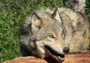 В 2010 году в Сумской области от укусов животных пострадали почти 3 тысячи человек
