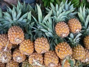 Полиция Эквадора задержала партию ананасов,  фаршированных  тонной кокаина