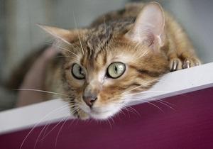 В Новой Зеландии общественные активисты требуют запретить кошек