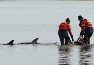В Бразилии спасли 30 дельфинов, которые выбросились на сушу