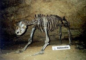 В Украине нашли останки древнейших животных