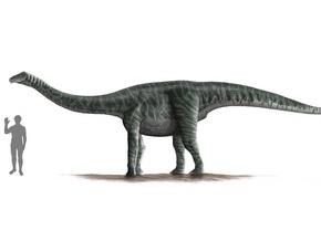Длинношеие динозавры не могли высоко поднимать голову