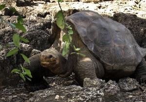 В Коста-Рике убит защитник морских черепах