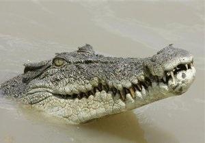 В Таиланде крокодил укусил дрессировщика за голову