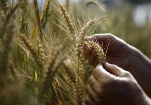 Украина поставила страдающим от неурожая китайцам четверть миллиона тонн зерна