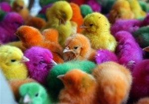 Британские ученые установили, что птицы способны различать оттенки цветов, которые не дано видеть человеку