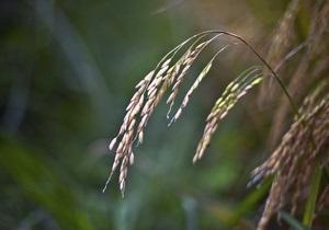 Украина намерена ввести квоты на экспорт зерна до конца года