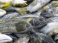 Найдена рыба, впадающая в летнюю спячку